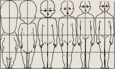 физическое развитие ребенка. Изменение пропорций тела в процессе развития ребенка