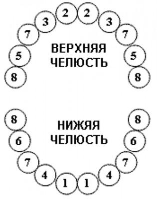 график прорезывания зубов у детей